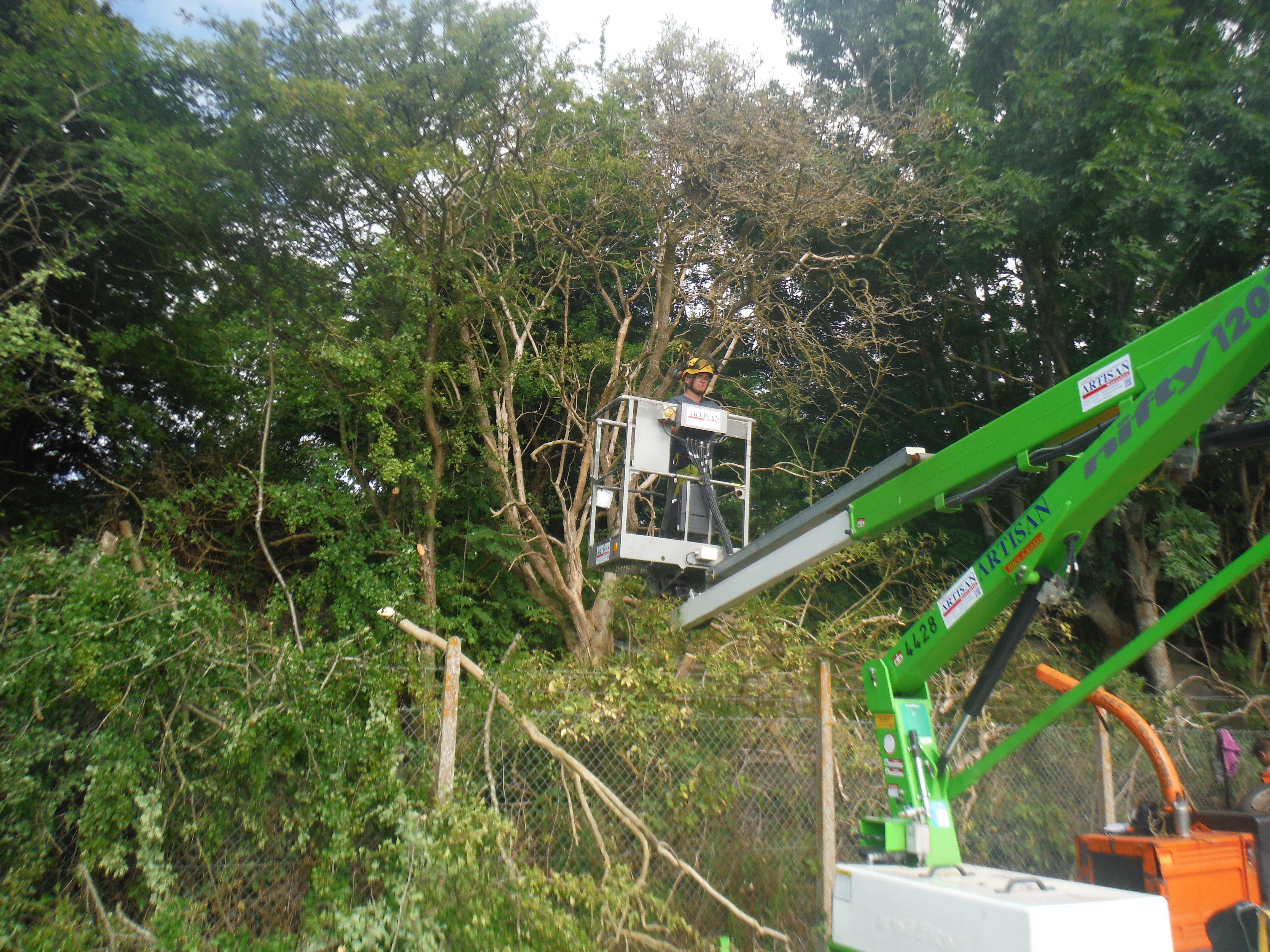 Tree repairs