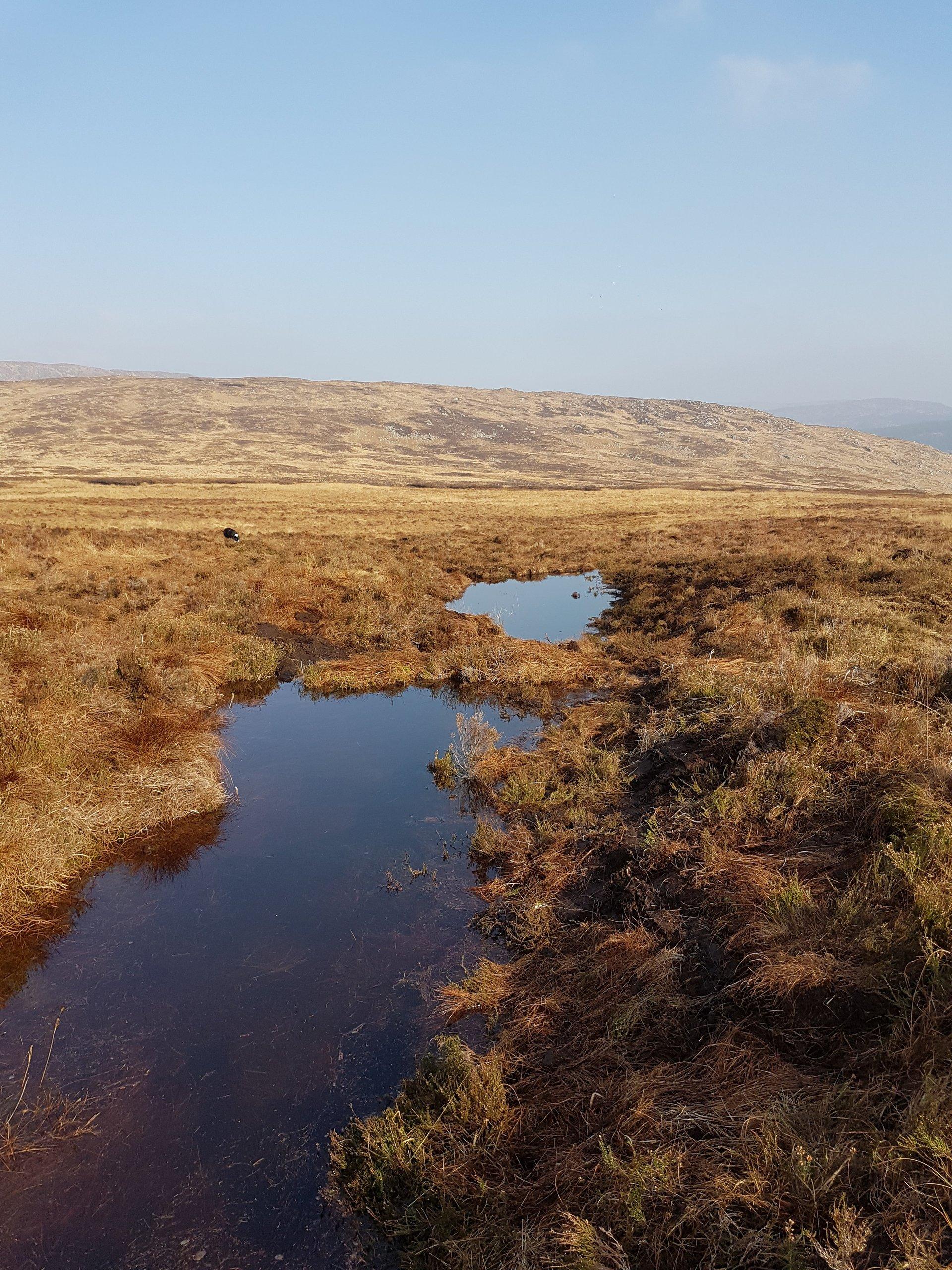 Cairnsmore Peatland Restoration