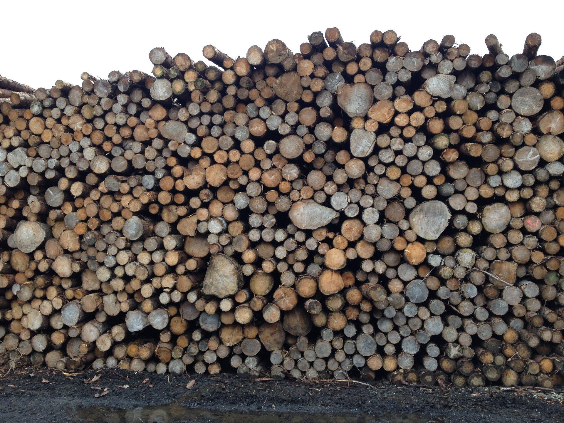 Firewood stock
