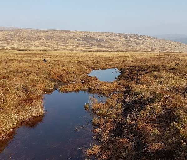 peatland restoration work