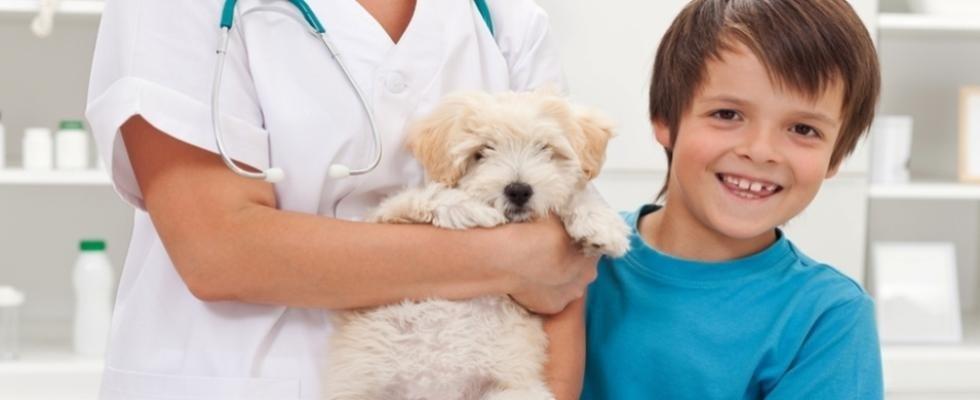 studio veterinario