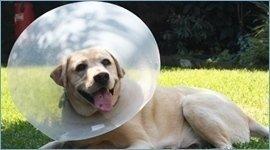 analisi cliniche per animali