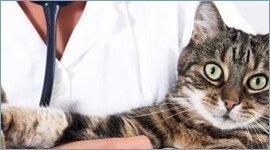 laboratorio clinico per animali