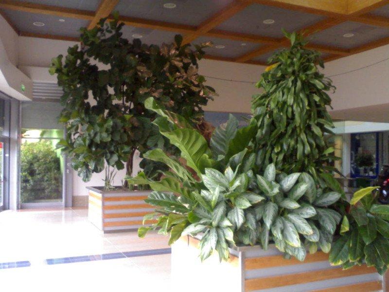 Servizio di manutenzione di piante  a auchan da green life