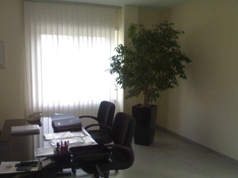 Coltivazione in idrocoltura moncalieri to green life - Piante per ufficio ...