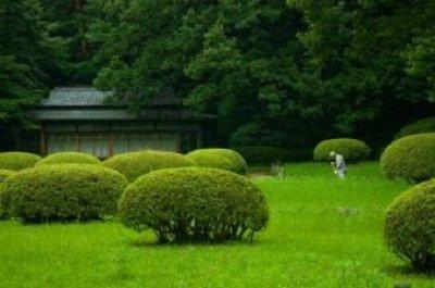 un giardino con cespugli