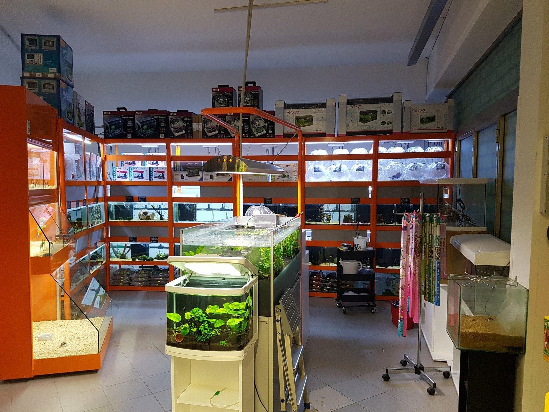 esposizione di acquari in un negozio di animali