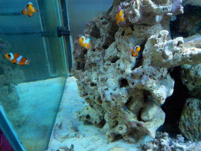 acquario con pesci colorati