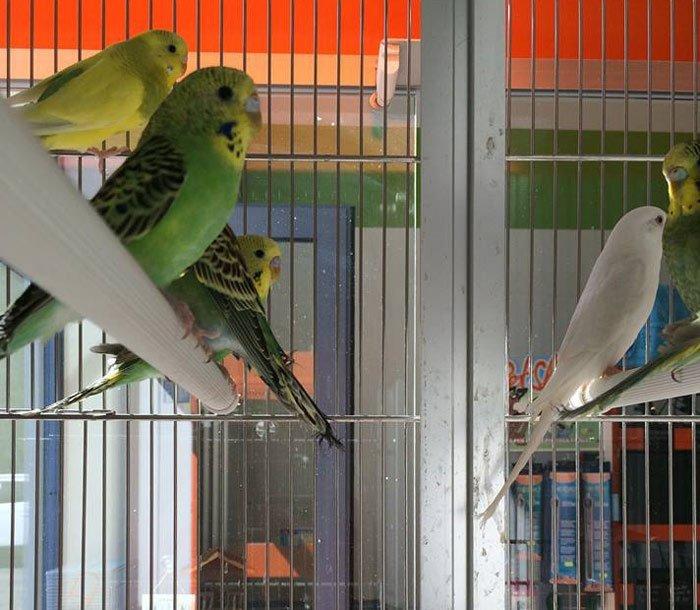 pappagalli colorati in una gabbia