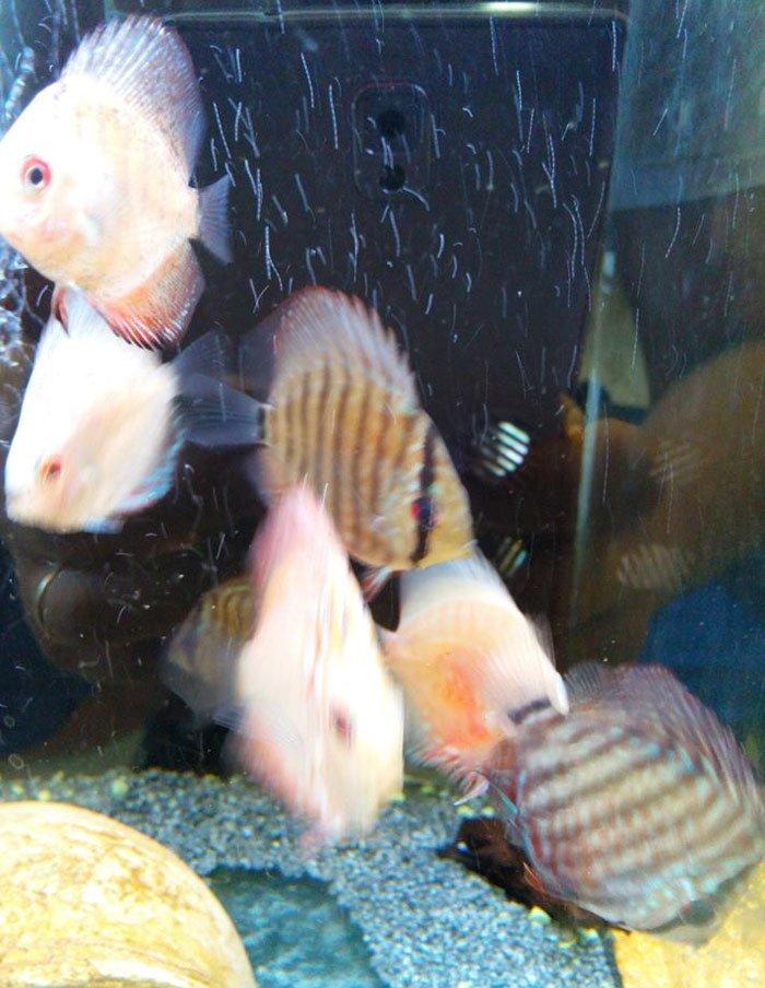 pesci in un acquario