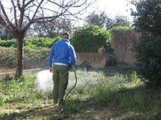 disinfestatore al lavoro in giardino