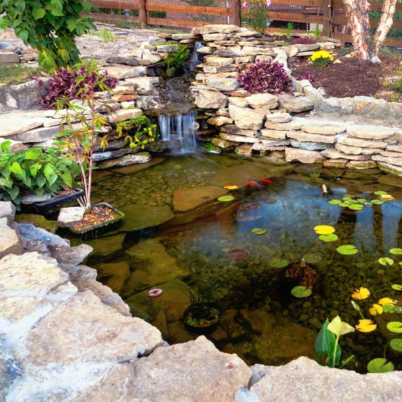 Pond maintenance company bridgwater perfect ponds plus for Pond maintenance