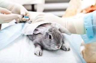esami cardiologici animali