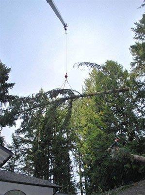 Emerald Coast Tree Service - Tree Removal Service Pensacola FL