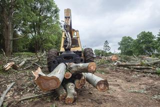 tree removal Lockport, NY