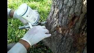 Tree fertilization by injection
