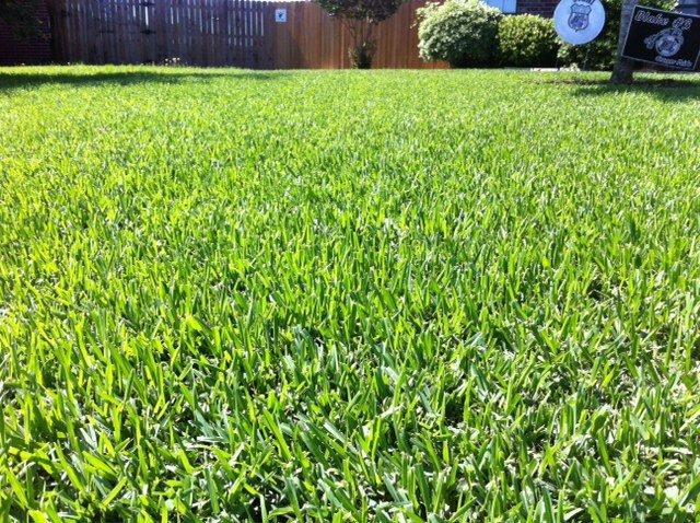 Green, lush lawn fertilized by Binford