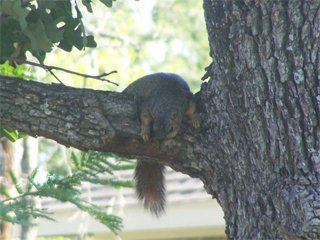 Squirrel just relaxing