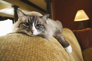 Veterinarian Cat Behavior Clinic Greensboro, NC