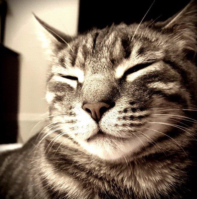 Cat enjoying the sun - the cat clinic of greensboro
