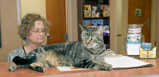Jake at Greeting Desk - Cat Veterinarian Greensboro, NC