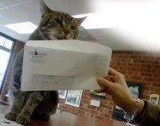 Cat Care Greensboro, NC