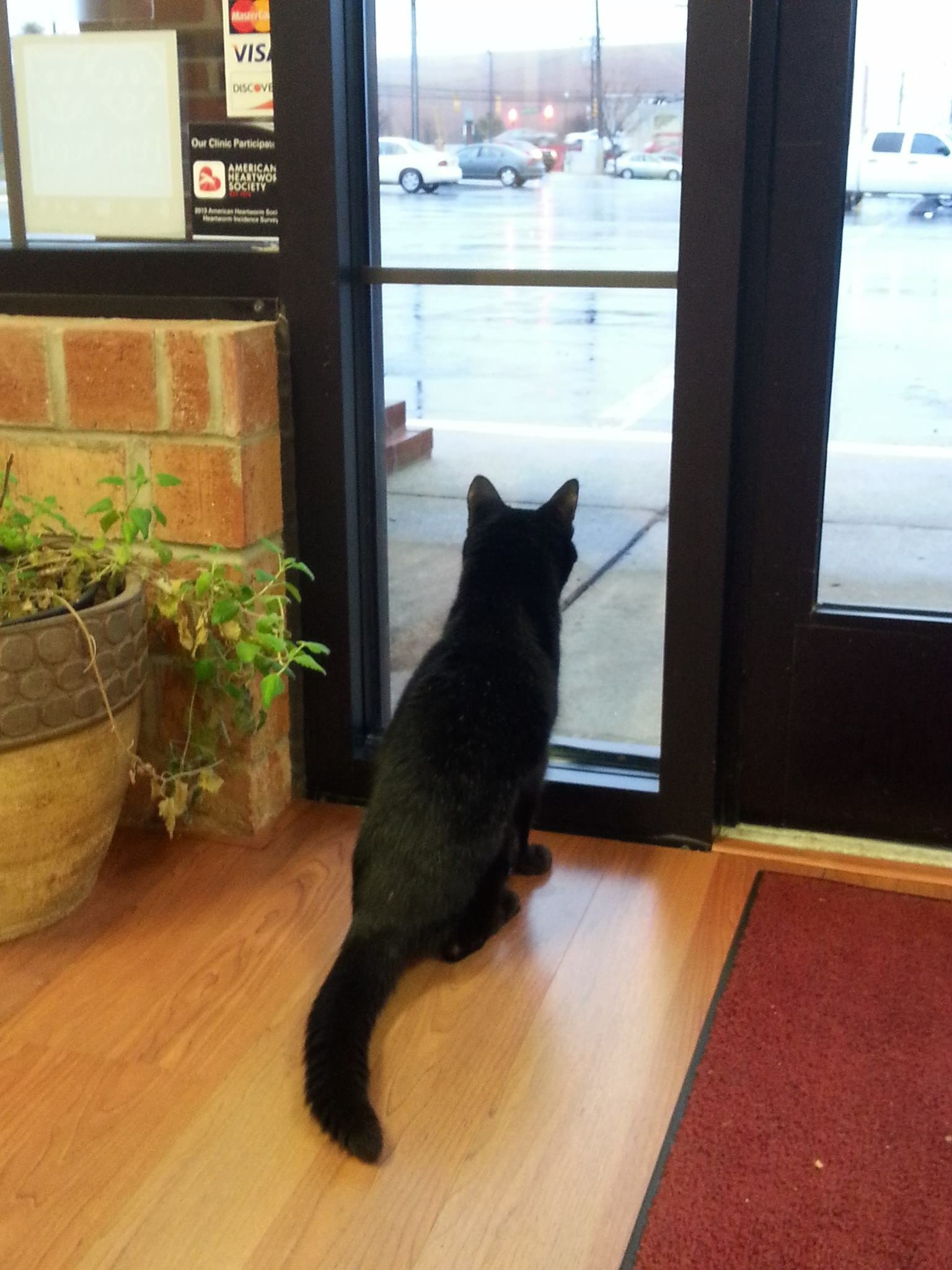 Cat looking out the window - The Cat Clinic of Greensboro