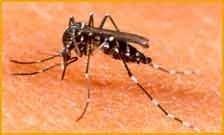 Disinfestazione da zanzare Green Mouse Pest Control