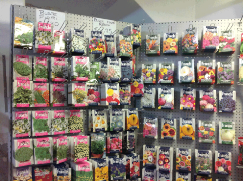 sementi di piante e fiori