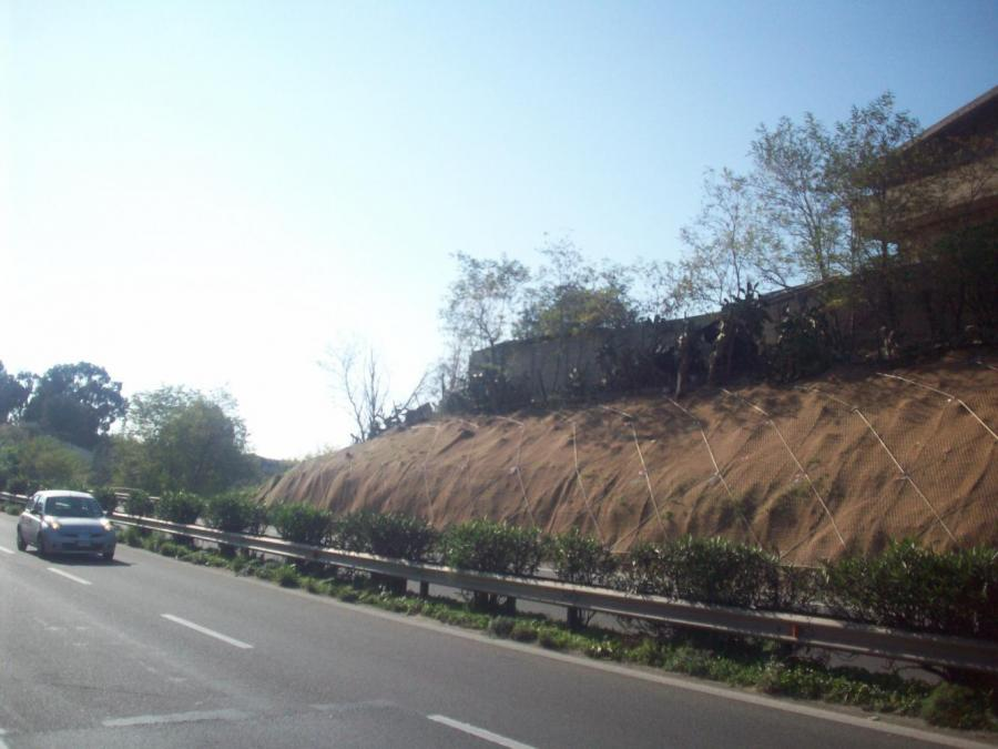 strada asfaltata vicino a un muretto
