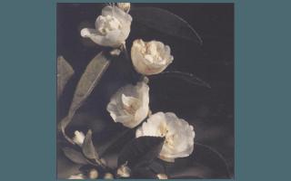 BLONDY (AUSTRALIA 1983,E.R.SEBIRE)