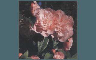SWEET EMILY KATE (AUSTRALIA 1983,R.GARNETT)