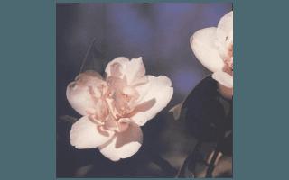 TINY PRINCESS (USA 1956,K.SAWADA)