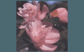 ITTY BIT (NUOVA ZELANDA 1981,F.JURY)