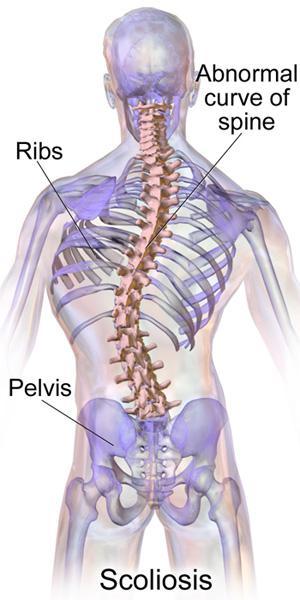 un'immagine di un corpo umano e delle frecce che indicano alcune parti del corpo