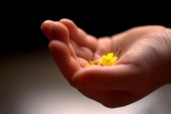 Una mano con due fiori di color giallo
