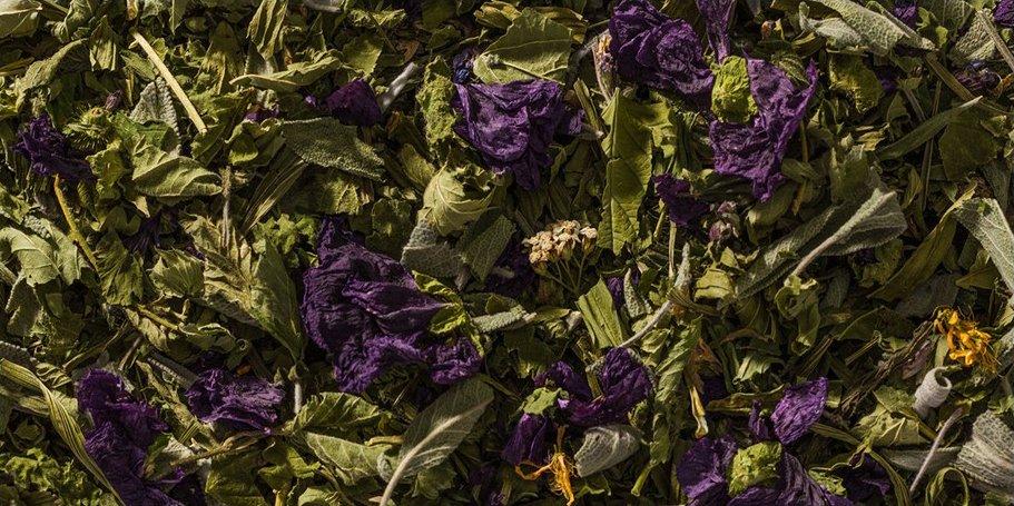 Dei fiori di color viola e delle foglie essiccate