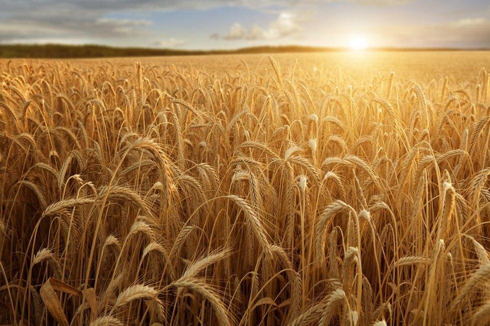 Articoli per Agricoltura provincia Pavia