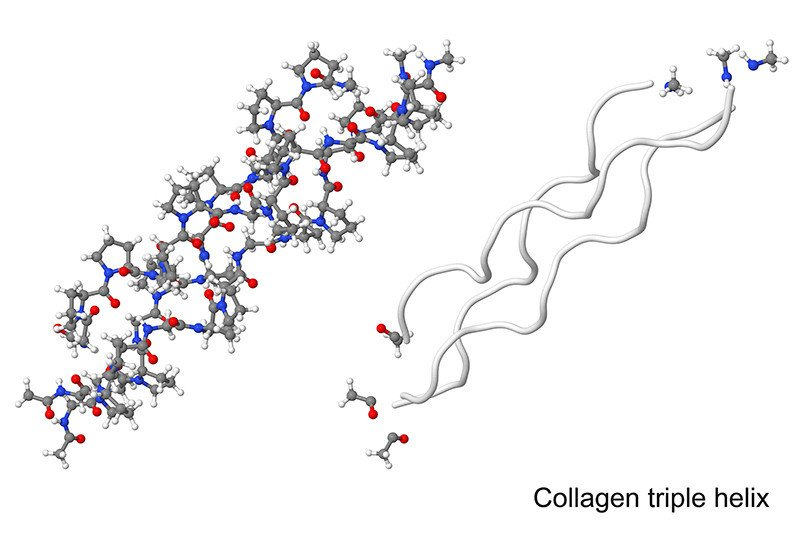 Hydrolysis breaks down collagen triple helix into shorter, easily absorbed pieces