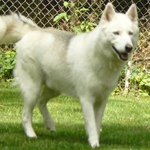 Dogs at our dog kennels in Batavia, OH