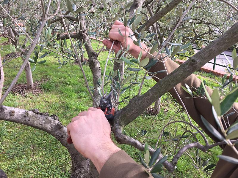 potatura alberi genova