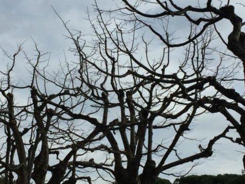 potatura alberi genova davagna