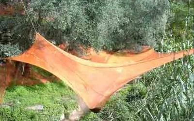 rete raccolta olive