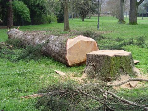 abbattimento alberi genova