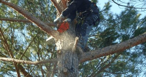 potature tree climbing genova