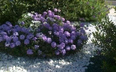 Realizzazione giardino con arbusti