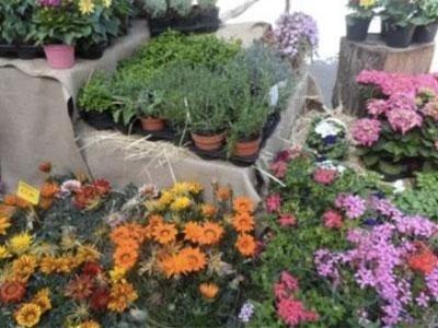 Piante ornamentali bari vivai decandia for Allestimento giardini privati