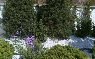 Arbusti e piante