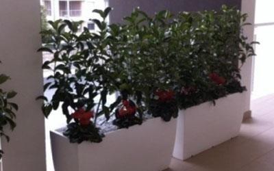 Allestimento piante