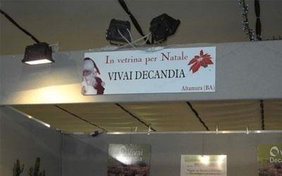 Vivai Decandia a Natale
